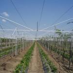 Соответственно метод как выращивать овощи с использованием теплицы-домика из сетки - завоевывает большую популярность среди,  как потребителей ратующих за экологическую чистоту, так и среди производителей голосующих за прототу, урожайность, качество и экологичность производимой продукции.