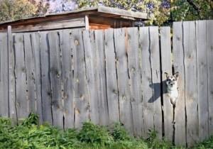 В этом случае в вольере необходимо сделать возвышенности. Чтобы собака смогла видеть, происходящее вокруг нее.