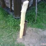 """.""""Черкесский способ"""" защитить столбы деревянные от гниения основан на движении соков"""