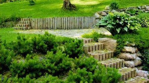 Какие растения сажают на склонах 67